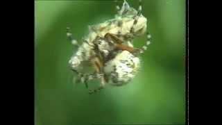 Documentaire Grillons et sauterelles