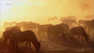 Documentaire Voyages au bout du Monde – Kenya, les réserves du Masai Mara et du Laikipia