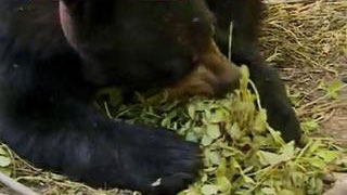 Documentaire Dans la peau d'un ours