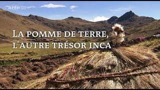 Documentaire La pomme de terre, l'autre trésor inca