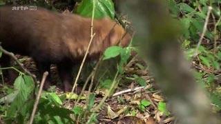 Documentaire Les grands animaux d'Amérique du Sud – Le tamanoir