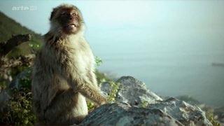 Documentaire Méditerranée sauvage – Les voyageurs