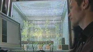 Documentaire La force cachée des plantes – Championnes