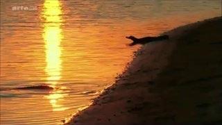 Documentaire Voyages au bout du Monde – Au Brésil, le Pantanal