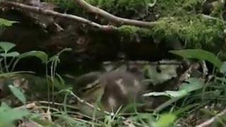 Documentaire Planète Terre – Les saisons en forêt