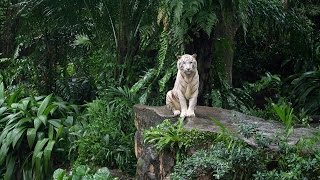 Documentaire Les jungles
