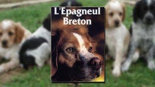 Documentaire L'épagneul breton