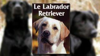 Documentaire Le labrador retriever