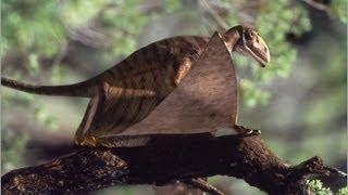 Documentaire Dinosaures du jurassique (1/3) : l'envol des ptérosaures