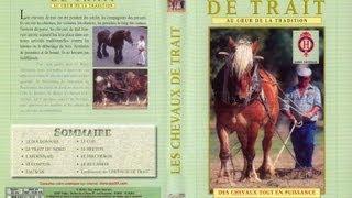 Documentaire L'utilisation des chevaux de traits et traditions