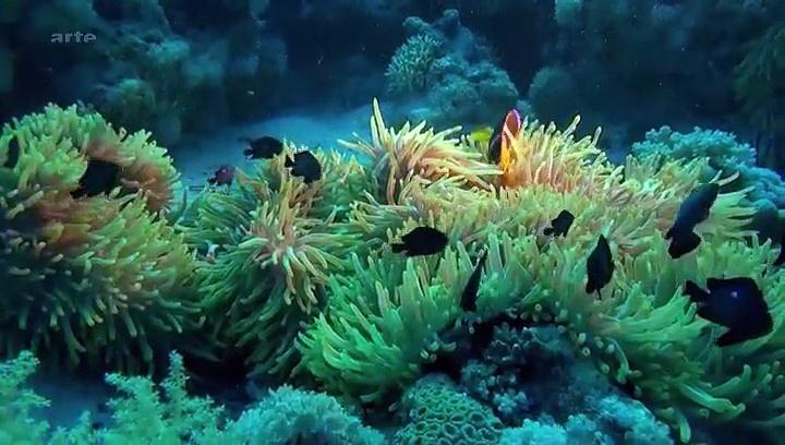 Documentaire Ces drôles de poissons – Pas si bêtes que ça !