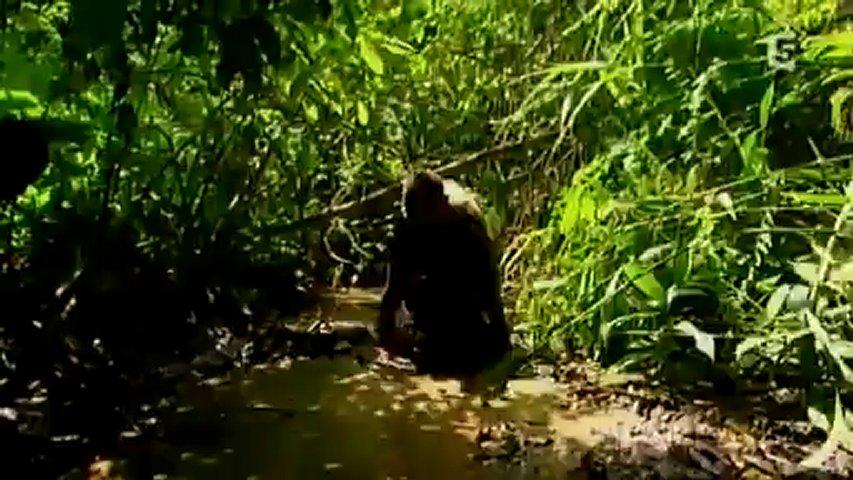 Documentaire Dans la jungle avec les pygmées