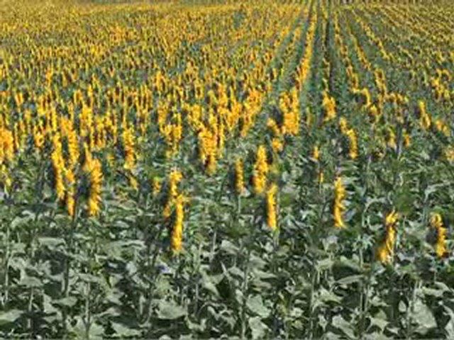 Documentaire La semence dans tous ses états