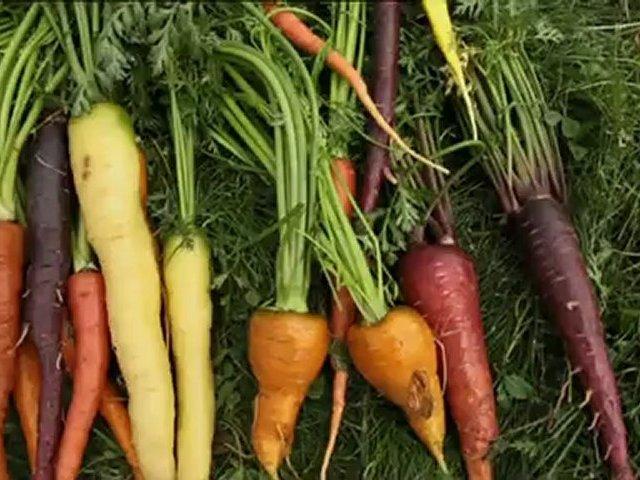 Documentaire Légumes d'antan, retour gagnant