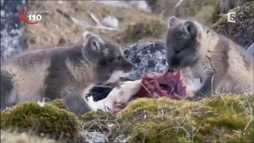 Documentaire Révolutions dans la nature