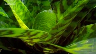 Documentaire Drôles de Plantes – Les carnivores
