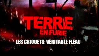Documentaire Terre en furie – Les criquets : véritable fléau