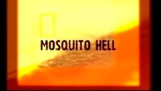 Documentaire L'enfer des moustiques