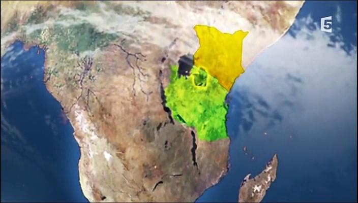 Documentaire Serengeti, panique dans le troupeau
