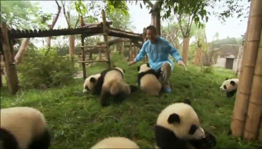 Documentaire Sur la piste des pandas