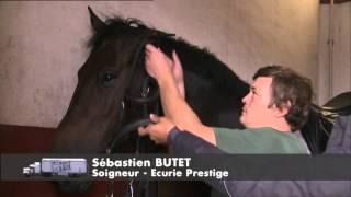 Documentaire C'est pas sorcier – Le Cadre Noir : les sorciers montent sur leurs grands chevaux