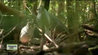 Documentaire Echappées belles – Nouvelle-Calédonie