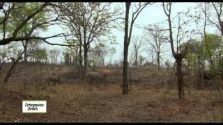 Documentaire Echappées belles – Zambie, un pays, un fleuve, des traditions