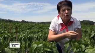 Documentaire Echappées belles – Bienvenue au Pays basque !