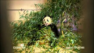 Documentaire C'est pas sorcier – Pandas géants superstars