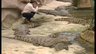 Documentaire C'est pas sorcier – Les crocodiles