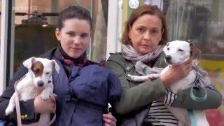 Documentaire Le chien