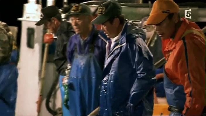 Documentaire Alerte, méduses géantes !