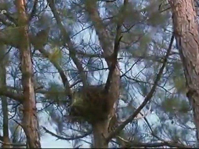 Documentaire Cuba le parc national Humboldt – Au pays des colibris