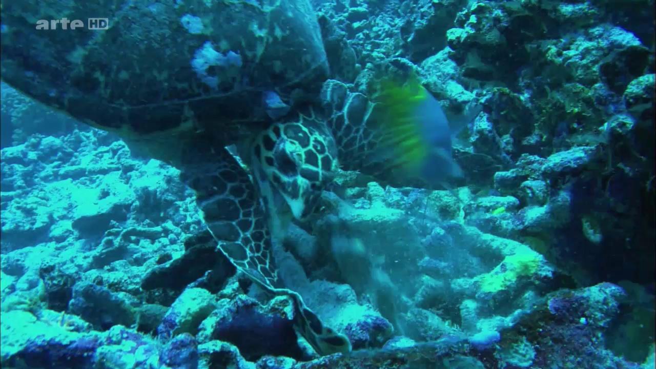 Documentaire Danse avec les poissons – Les requins marteaux