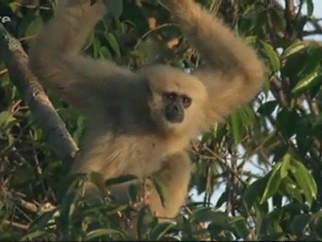 Documentaire L'aventure de la vie – Les primates