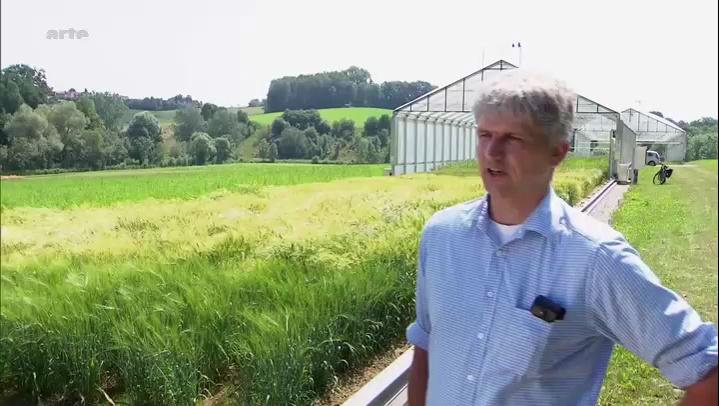Documentaire Le blé et le climat