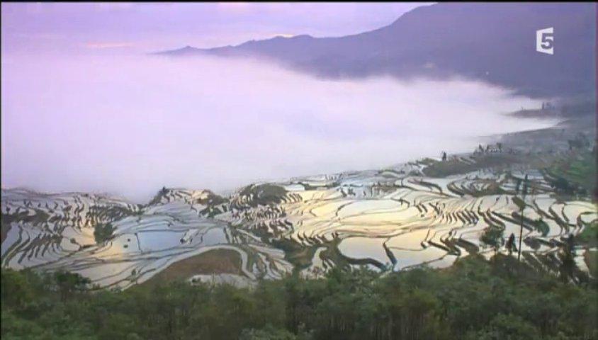 Documentaire Le peuple des rizières