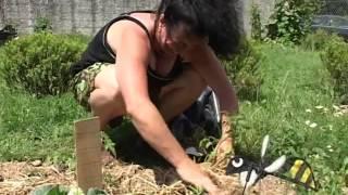 Documentaire Jardins partagés