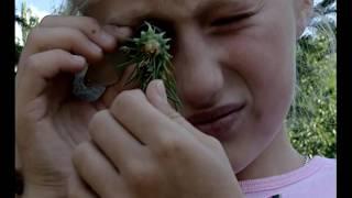 Documentaire Grandeur Nature – Les insectes maîtres du monde