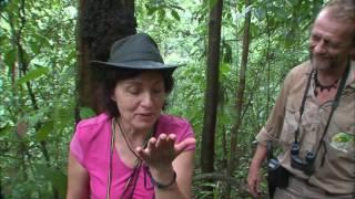 Documentaire Au delà des voyages – Guyane, pays de forêt et d'eau