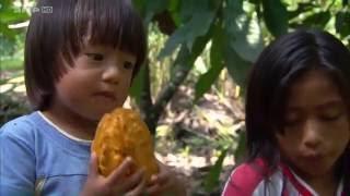 Documentaire Equateur, l'autre pays du chocolat