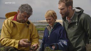 Documentaire Xenius – Fruits de mer… à deguster les yeux fermés