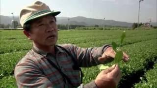 Documentaire Japon, la voie du thé
