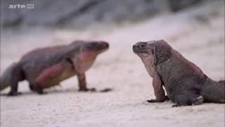 Documentaire La splendeur des Bahamas – 4/5 – Bancs de sable