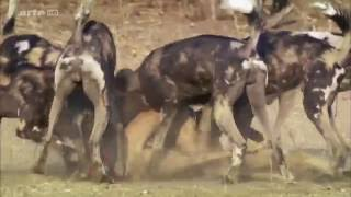 Documentaire Sa majesté le Zambèze – 2/2 – Un fleuve tout-puissant