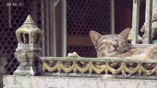 Documentaire Chasseurs de trésors à Bangkok
