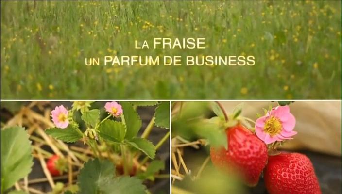 Documentaire La fraise : un parfum de business