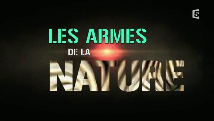 Documentaire Les armes de la nature – Les maitres du camouflage