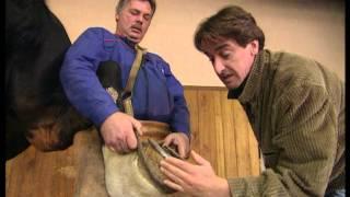 Documentaire C'est pas sorcier – Vie d'un cheval