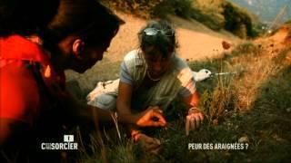 Documentaire C'est pas sorcier – Peur des araignées